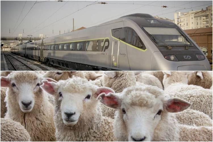 Comboio Intercidades atropela ovelhas no Alentejo