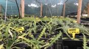 Viveiro em Montemor-o-Novo produz mais de 150 espécies da flora portuguesa