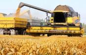A mecanização da agricultura reduziu a mão de obra 21% desde 2015, mas aumentou a produção