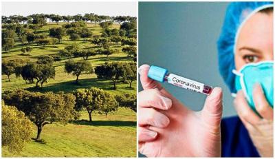 COVID-19/Dados DGS: Alentejo com mais 12 infetados e mais dois óbitos