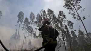 Incêndios: Arderam mais de 12 mil hectares no Alentejo, até setembro