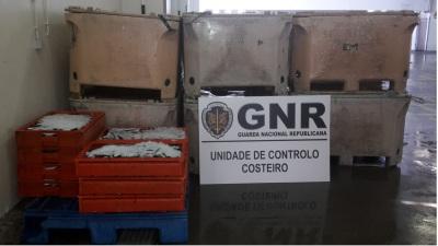 Sines: 448 quilos de sardinha apreendidos por excesso de captura