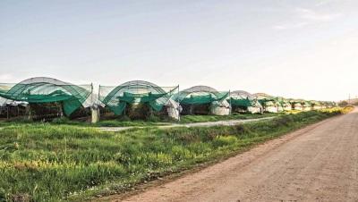 Estufas do Sudoeste Alentejano e Costa Vicentina podem vir a esgotar recursos hídricos
