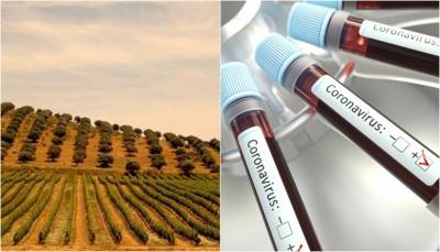 COVID-19: Mais dois novos casos no Alentejo. Concelho de Évora é o mais infetado