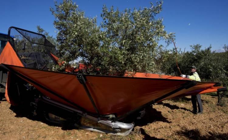 Em Portalegre houve aves mortas durante a apanha nocturna de azeitona