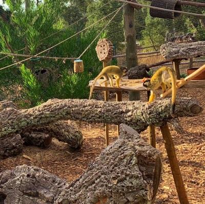 Monte Selvagem acolhe família de cinco macacos esquilo
