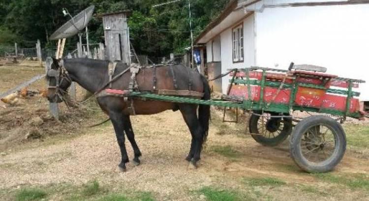 Colisão entre dois veículos e carroça com família cigana faz 2 feridos em Reguengos Monsaraz