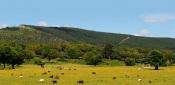 """Alentejo: Webinar explica """"A Sustentabilidade como fator chave para a retoma do setor do Turismo"""""""