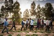 Seis trabalhadores agrícolas do Zmar realojados hoje por empresas