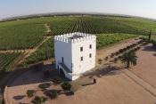 Vinhos: Portugal com duas marcas entre as 50 mais admiradas do mundo. Uma delas é alentejana