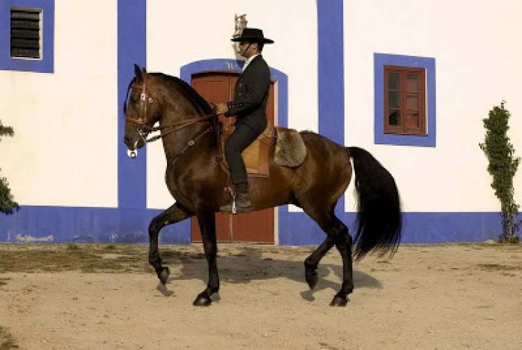 Alter do Chão promove cimeira internacional inédita sobre Economia do Cavalo