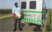 GNR resgata cegonha branca em Ferreira do Alentejo