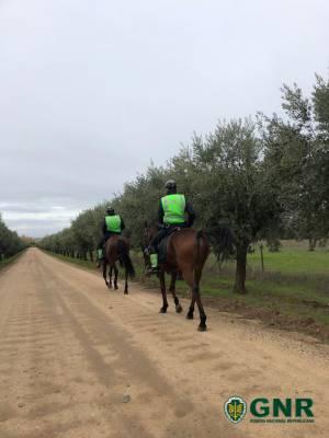 GNR reforça patrulhamento a cavalo em áreas florestais e agrícolas do distrito de Portalegre
