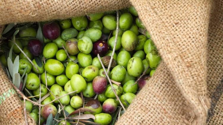 GNR apreende mais de 200 quilos de azeitona roubada em Elvas