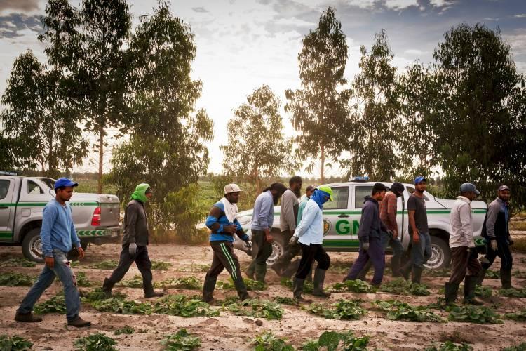 """No Alentejo, """"é precisamente na agricultura que nós encontramos situações de exploração e até a roçar a escravatura do século XXI"""", explica Ass. Solidariedade Imigrante (c/som)"""