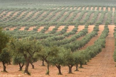 """Évora recebe seminário sobre """"Protecção Fitossanitária do olival"""", a 27 de janeiro"""