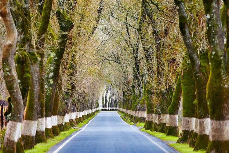 """Governo abre procedimento para classificar o """"Túnel das Árvores"""" em Marvão, uma das mais bonitas estradas de Portugal"""
