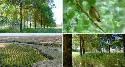 Maior transplante de árvores ripícolas do país foi feito em Alqueva