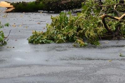 Mau tempo provoca queda de árvores no Alentejo