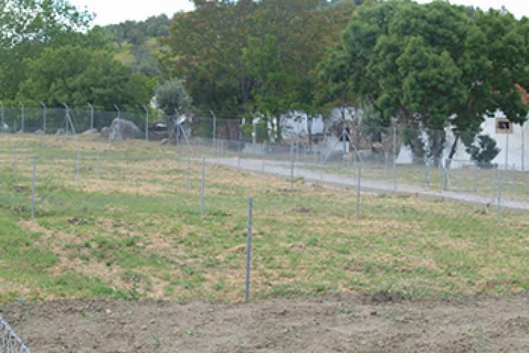 Câmara de Elvas abre candidaturas para as hortas comunitárias