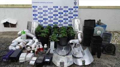 PSP de Évora deteve homem de 32 anos e apreendeu material utilizado para montagem de estufa de canábis