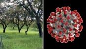 COVID-19/Dados DGS: Alentejo regista mais 12 novos infetados