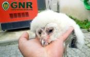 Ferreira do Alentejo: GNR resgata cegonha-branca e coruja-das-torres
