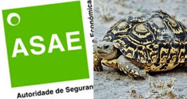 ASAE apreende 3 tartarugas vivas de espécie protegida