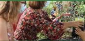 Câmara de Alandroal inicia distribuição de árvores à população