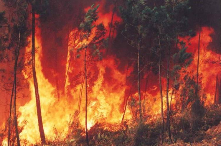 A Proteção Civil alerta a população dos distritos de Évora, Beja e Portalegre para o risco de incêndio