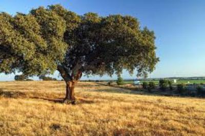 Município do Baixo Alentejo reivindicam no Plano de recuperação e Resiliência investimentos de 50 M€