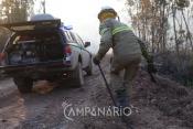 Distritos de Portalegre e Beja ficam com vagas de guardas florestais por ocupar
