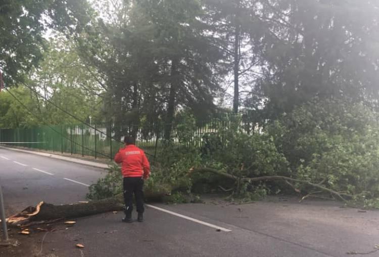 Elvas: Queda de Árvore derruba poste de eletricidade junto a escola básica