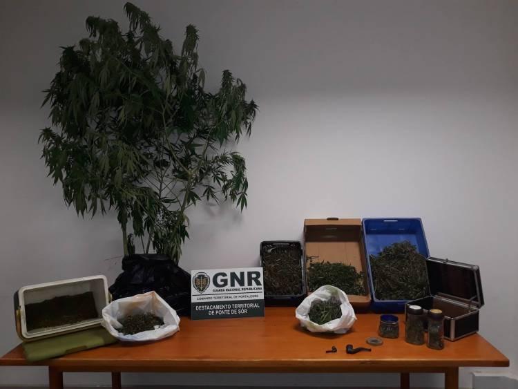 Homem detido em flagrante delito com mais de 1,7 quilos de canábis em Ponte de Sor