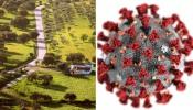 COVID-19/Dados DGS: Alentejo regista mais de 50 novos casos
