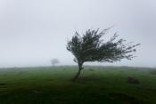 Distritos de Évora e Portalegre sob aviso amarelo devido ao vento forte