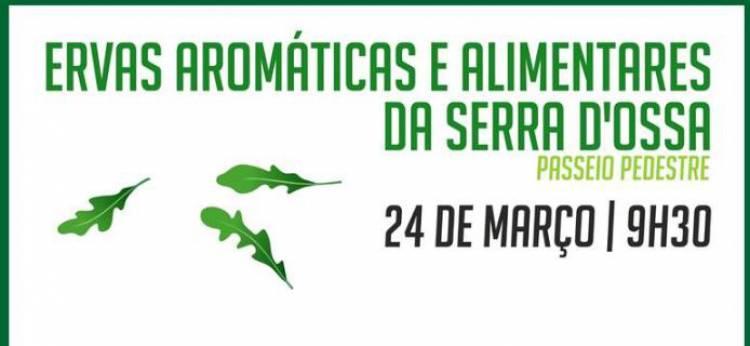 """Passeio Pedestre """"Ervas Aromáticas e Alimentares da Serra D'Ossa"""""""