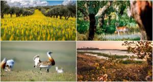 Alentejo em projeto europeu para conservação do património natural