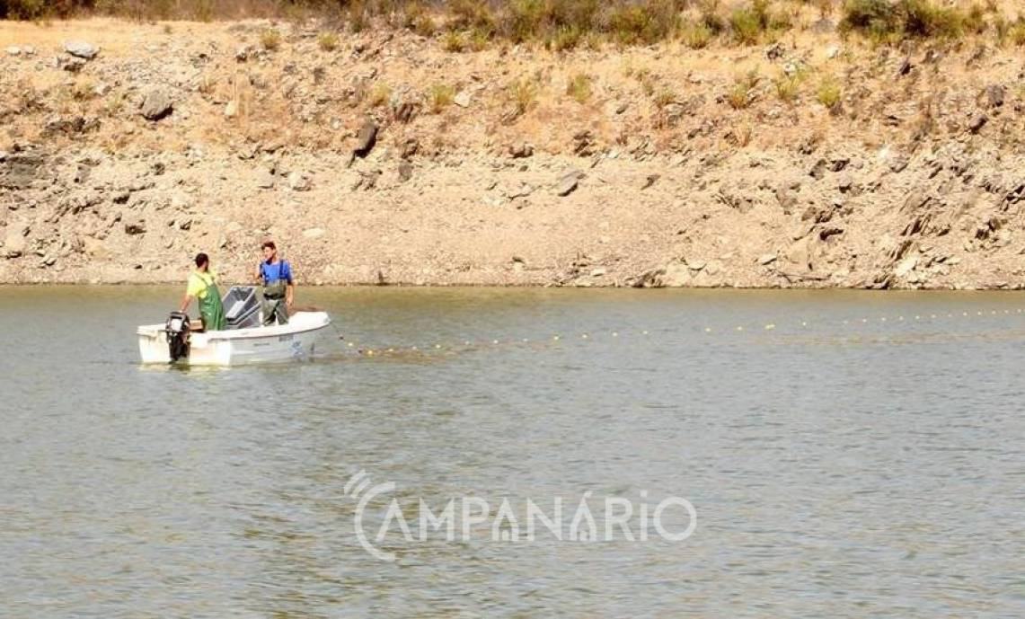 Iniciados trabalhos de remoção de peixe da Barragem da Vigia (c/som e fotos)