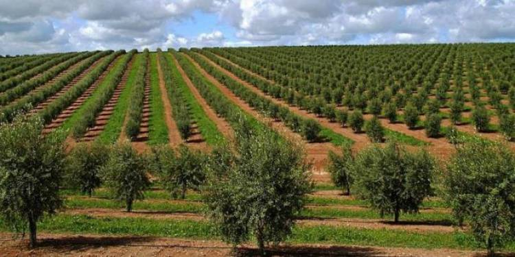 """""""Não somos contra o Olival intensivo, mas sim contra a forma como está a ser implementado"""", diz ambientalista José Martins (c/som)"""