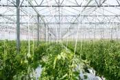 CEBAL realiza conferência online sobre inovação na proteção das culturas agrícolas