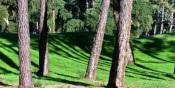 Portugal: Há 102 câmaras que não contam com um plano municipal de defesa da floresta contra incêndios (PMDFCI) atualizado