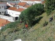 Alcácer do Sal: Vegetação do miradouro, encosta do castelo e estrada de Santa Luzia está a ser aparada
