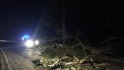 Estrada Nacional 244, em Ponte de Sor, cortada devido a queda de árvore
