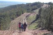 Município de Borba adia passeio pedestre pela Serra d'Ossa