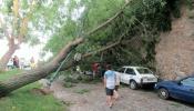 Chuva e vento forte causam estragos nos concelhos de Nisa, Elvas, Portel e Évora