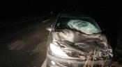 Violenta colisão com manada de vacas destrói viatura no Litoral Alentejano