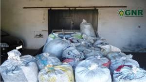 GNR detém cinco pessoas  em Alvito pelo furto de uma tonelada de azeitona