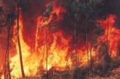 Atualização: Incêndio em Odemira conta com mais de 40 operacionais