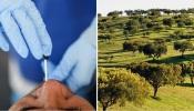 COVID-19/Dados DGS: Alentejo regista mais sete casos de infeção e três mortes